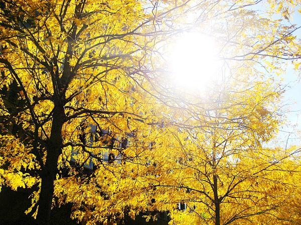 Fall Colours in Philadelphia