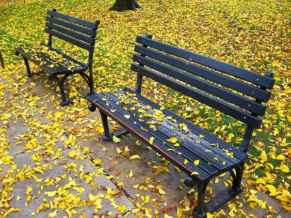 Fall Colours and Park Benches