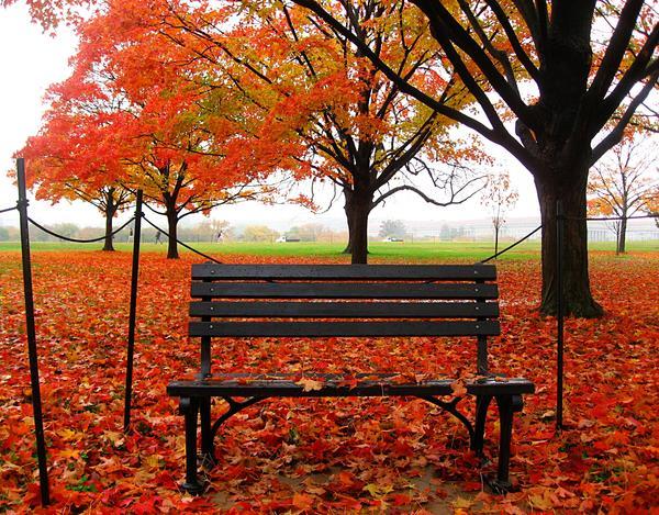 Fall Colours in Washington DC